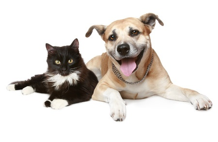 How Therapeutic Diets Can Benefit Your Pet
