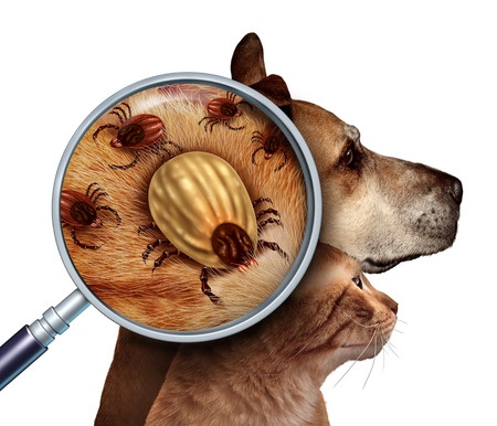 Flea and Tick Prevention for Cats and Dogs: What You Need to Know