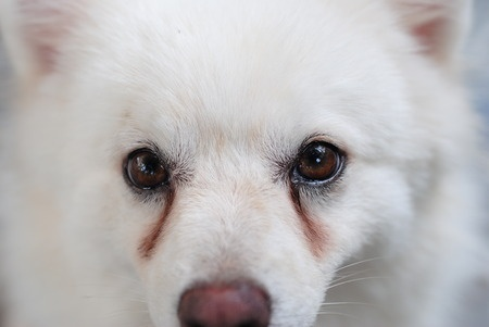 3 of the Best Pet-Safe Products for Tear Stains