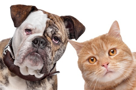 5 Pet Treats Good for Your Cat or Dog